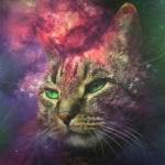 cat space canvas