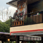 hostel painting tiger mural